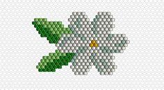 diagramme fleur de tiaré