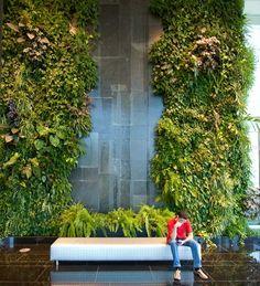 Natura Towers - Philodendron giganteum   Vertical Garden Design