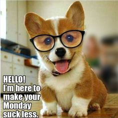 "HAPPY MONDAY!  ""LIKE"" to show this GlassesUSA puppy some love:)www.SELLaBIZ.gr ΠΩΛΗΣΕΙΣ ΕΠΙΧΕΙΡΗΣΕΩΝ ΔΩΡΕΑΝ ΑΓΓΕΛΙΕΣ ΠΩΛΗΣΗΣ ΕΠΙΧΕΙΡΗΣΗΣ BUSINESS FOR SALE FREE OF CHARGE PUBLICATION"