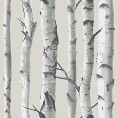 Wallpops Birch Tree Peel And Stick Wallpaper, White