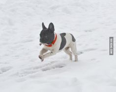 """""""Louis LOVES playing in the snow"""" - via 9gag"""