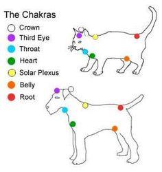 Animal Chakras*