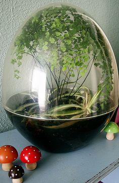 Gorgeous Egg Terrarium by Flickr user ex.libris (http://www.flickr.com/photos/exlibris/3352879022/in/gallery-8048901@N05-72157622547510824/) #terrarium