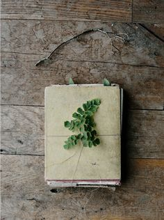 A gorgeous stack of handmade paper accented by simple fern clipping and thread.