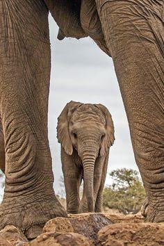 Elephant Photography 25