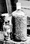 BC had 2 big gold rushes, one in 1858 on the Fraser River and the other in 1862 in the Cariboo--bottles of gold Fraser River, Gold Rush, Vodka Bottle, Bottles, Canada, History, British Columbia, Social Studies, Minerals