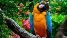 Macaw by Nessa