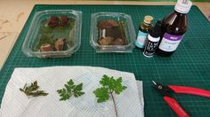 Preserving Plants with Glycerine (Frugal Wargames Foliage)