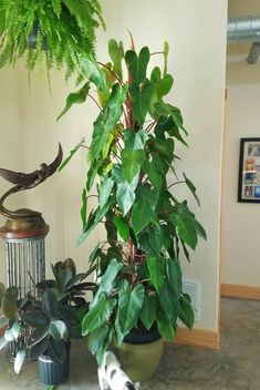 Indoor Garden, Garden Plants, House Plants, Indoor Trees, Room With Plants, Interior Plants, Foliage Plants, Outdoor Plants, Tropical Plants