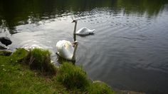Aino ja Janne, Aulanko Nature Reserve, Hotel Spa, Finland, Park, Pictures, Collection, Photos, Photo Illustration, Parks