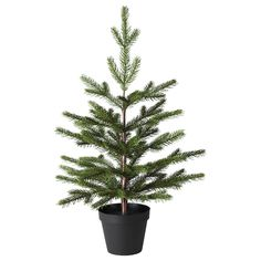 VINTER 2020 Artificial potted plant - in/outdoor/Christmas tree green - IKEA Artificial Christmas Tree Stand, Potted Christmas Trees, Live Christmas Trees, Artificial Tree, Outdoor Christmas, Ikea Christmas Tree, Nyc Christmas, Christmas Decorations, Winter Potted Plants