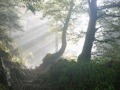 Rise, Morning, Fog, Sunbeam