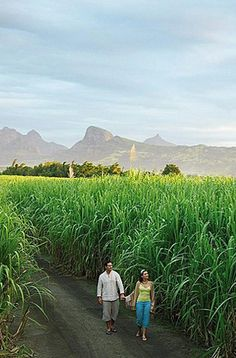 Relaxation method: Walk in Nature | Mauritius (http://www.facebook.com/BeautyOfMauritius)