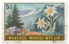 stamps from mongolia - Google Search
