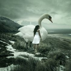 Surrealist photography, like surreal painting, depicts objects, people and landscapes in a non-rational or dream-like way. In this post, we have compiled a list of Surreal Photo by Anja Stiegler. Swans, Photoshop, Les Illuminations, Swan Pictures, Dream Photography, Photography Zine, Human Photography, Fantasy Photography, Creative Photography