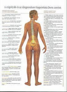 Dorn terápia és Breuss masszázs (DTBM) | Anolissi Beauty Care, Hair Beauty, Medical Anatomy, Neurology, Sciatica, Fibromyalgia, Healthy Tips, Pilates, Massage