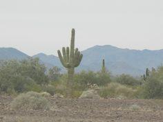The desert in Quartzsite, Arizona