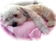 Cutie little sweet dog. Not. :-)