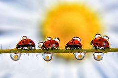 En marche!!! by Andrea Mastronardi on 500px