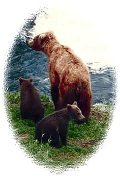 Grizzly Bear Sow and Cubs by a river ©