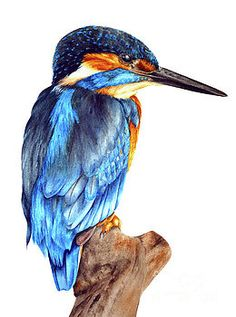 Portrait of a Kingfisher by Marie Burke