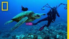 Understanding the Oceans | Sea of Hope: America's Underwater Treasures