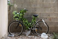 The garden takes over the bicycle… natural recycling in Tel Aviv, Israel...