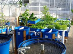 Could aquaponics be the future of farming? Mississauga Food Bank @Food_Bank and @nelsonandpade are certainly on to something. Read all about it in our latest, summer issue. #aquaponics #urbanfarms http://www.harrowsmithalmanac.com