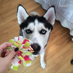 Give me the toy and no one gets hurts