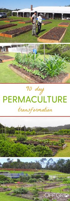 Replace your lawn with an abundance of food: a 90 day permaculture transformation