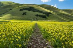 Castelluccio di Norcia, surrounded by mountains and lentils flowers, Umbria - Italy by L. G. - luigig75 on 500px