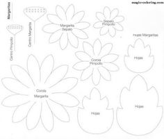 MAGIC-COLORING | Matricaria (chamomile, daisy) flower template