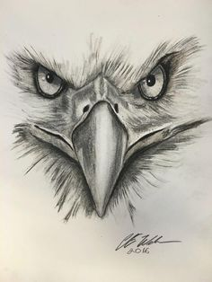 Tattoos, animal tattoos for men, tattoos for guys, bird drawings, animal dr Bird Drawings, Pencil Art Drawings, Art Drawings Sketches, Animal Drawings, Tattoo Drawings, Body Art Tattoos, Small Tattoos, Sleeve Tattoos, Wing Tattoos