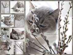 Pussy Willow...by Thea Veerman