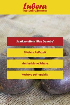 Unsere Saatkartoffeln 'Blue Danube' überzeugen nicht nur durch ihr einzigartiges Aussehen, auch als leckere Bratkartoffeln können sie überzeugen! Mehr Infos und Tipps finden sie in unserem Shop ↓  ↓  ↓ _______________________________________________________#bratkartoffel #kartoffel #mehlig #kochen #saat #garten #gartengestaltung #dekoideen #diy #selbstversorger Blue, Large Plants, Potato Fry, News, Cooking, Tips, Lawn And Garden