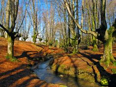Information to visit the Otzarreta Beech Forest in the Gorbeia Natural Park, what to see in the surroundings, how to get there, hiking routes in Bizkaia Hiking Routes, Natural Park, Basque Country, Romanesque, Places To Visit, Country Roads, Nature, Travel, Monuments