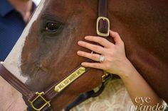 Engagement Photography, Horse, White Magnolia, Kentwood, Louisiana, Eye Wander Photo, Baton Rouge Photographer, Aaron Hogan Outdoors, Wedding Planning, Couple, Beautiful, Proposal