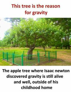 Yahi jagah saare fasad ki jad h.Kash Newton k opar Apple k bajaye Tree gir gaya hota kisa khatam xD Wierd Facts, Wow Facts, Intresting Facts, Real Facts, Wtf Fun Facts, True Facts, Funny Facts, Random Facts, Funny Jokes
