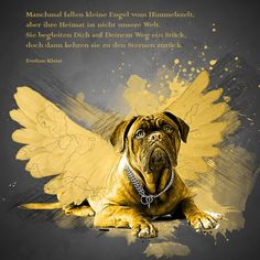 poetry Sometimes … burial poem - Animal Photos Anubis, Animals And Pets, Cute Animals, Mastiff Mix, Woodland Party, Westies, Beagle, Best Dogs, Cute Dogs