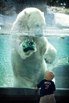Love this photo. It really shows the size of a polar bear.
