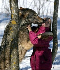 a pack of wolves as pets 4 A pack of wolves as pets video Selekh photo wolf pack image domestic … Wolf Spirit, Spirit Animal, Beautiful Creatures, Animals Beautiful, Animals And Pets, Cute Animals, Wolf Stuff, Wolf Love, Beautiful Wolves