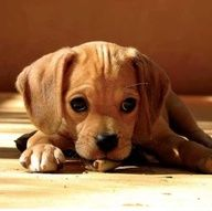cute photo : 124 | Puppies Lovers