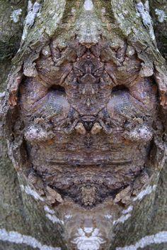 Des créatures dans des troncs darbres   des creatures dans des troncs d arbres elido turco 12