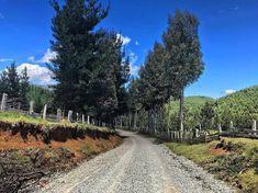 "36 Me gusta, 0 comentarios - Felipe Andrés Ibáñez Lagos (@felipe_ibanezlagos) en Instagram: ""🌳🏞"" Country Roads, Instagram, Lakes, Places"