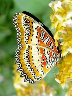 there's nothing as amazing as the patterns in butterflies!