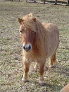 Любовь Лошадей, Красивые Лошади, Мини Лошади, Маленькие Жеребята, Животные Зоопарка, Милые Животные, Самые Симпатичные Собаки, Лошади, Животные