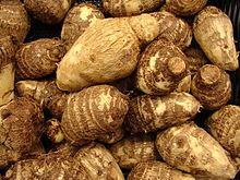 """FOOD PLANTS: Taro roots (Hawaiian """"Elephant Ear-related plants"""" or """"poi"""", or """"yautía"""", or """"malanga""""), are like yams (ñame), or like white sweet-potatoes (batata). However, yams and sweet-potatoes are the roots of climbing vines, while Taro are non-vine plants often used as decorative plants. (Nursery cultivated Elephant ears should never be eaten). The taste is bland like grits. The leaves must not be eaten raw (like rhubarb) but are nutritious if cooked properly."""