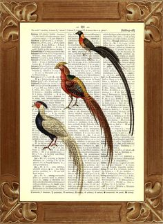 Items similar to Mouse, mice eating cheese Prints vintage illustration printed on old dictionary page on Etsy Colorful Birds, Pheasant, Rooster, Vintage World Maps, Mice, Unique Jewelry, Handmade Gifts, Prints, Animals
