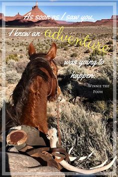 A good horse makes for the best adventure pal!