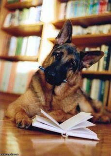 This is going to be my dog. He can help me study :)